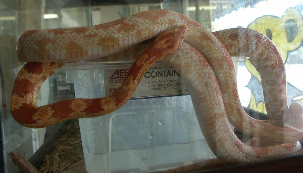 Pet Snakes, Pet Lizards and Pet Turtles at Grateful Pet ...