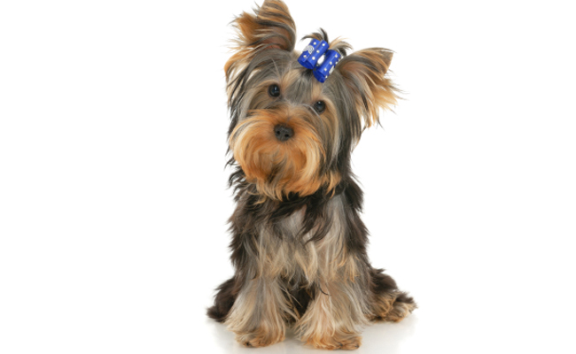 Pick Up Amp Delivery Pet Taxi From Grateful Pets