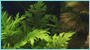Grateful Pet Supplies has a large variety of saltwater & freshwater aquarium plants in Charlotte NC