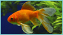 Grateful Pet Supplies has a large variety of freshwater pet fish in Charlotte NC
