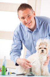 Dog Grooming Classes In Nc